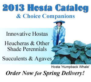 2013 Catalog of Hostas and Companion Plants