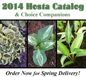 2014 Catalog of Hostas and Companions
