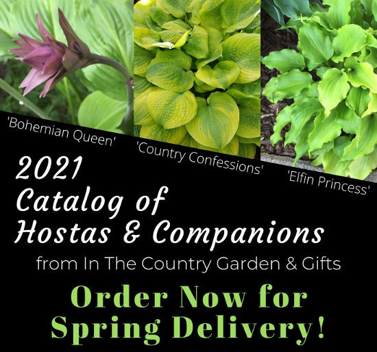 2021 Catalog of Hostas and Companions