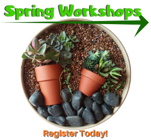 Spring Workshops - Reserve your spot today!