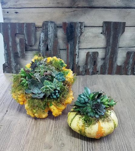 Succulent Gourd